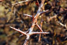 Free Thorn Stock Photo - 3182420