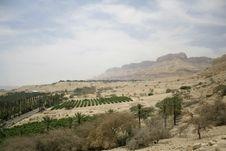 Free Vegetation In Desert Landscape Stock Image - 3182701