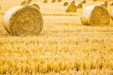 Free Straw Bale Rolls Royalty Free Stock Photo - 3183035
