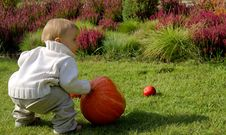 Free Infant In The Garden Royalty Free Stock Images - 3183159