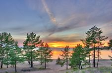 Sunset Landscape With Pines Royalty Free Stock Photography