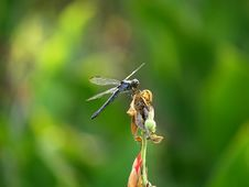 Free Dragonfly On Plant Stock Photography - 3185292