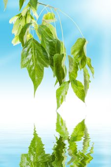 Free Green Leaves Stock Photos - 3185323