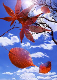Free Bright Autumn Royalty Free Stock Photography - 3185477