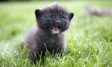 Free Kitty Royalty Free Stock Photography - 3185537