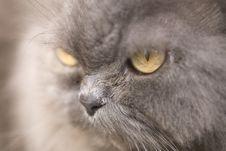 Free Cat Stock Photography - 3185712