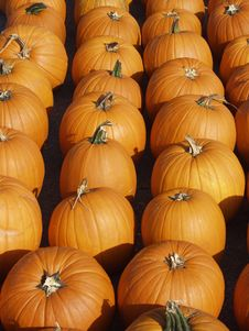 Free Rows Of Pumpkins Royalty Free Stock Photography - 3186107