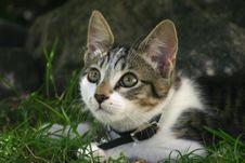 Free Cute Cat Hiding. Royalty Free Stock Photo - 3186405