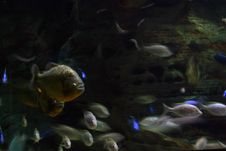 Free Fish Blur Royalty Free Stock Photo - 3186725