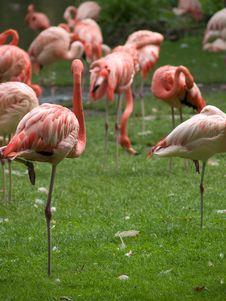 Free Flamingo Stock Photos - 3187803