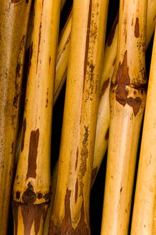 Free Dried Bamboo Background Royalty Free Stock Photos - 3187858