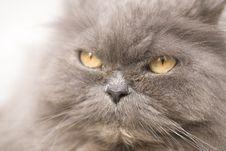 Free Cat Royalty Free Stock Photo - 3188275