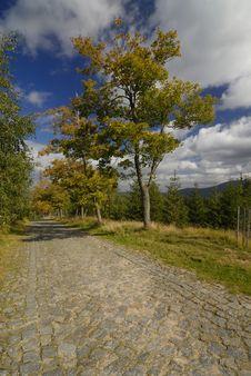 Free Autumn Royalty Free Stock Photo - 3188355
