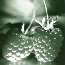 Free Raspberry Royalty Free Stock Image - 3188806