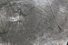 Free Log End Grain 2 Royalty Free Stock Photo - 3188855