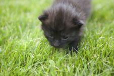 Free Kitty Royalty Free Stock Photo - 3188985