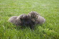 Free Kitty Stock Photo - 3189220
