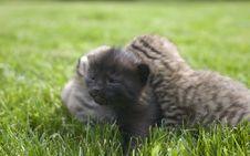 Free Kitty Stock Photo - 3189240
