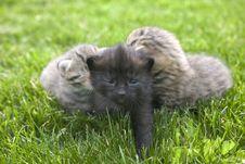 Free Kitty Royalty Free Stock Photos - 3189308