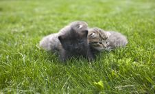 Free Kitty Royalty Free Stock Photo - 3189335