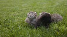 Free Kitty Royalty Free Stock Image - 3189396