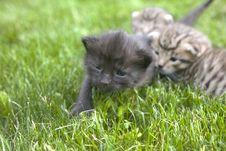 Free Kitty Royalty Free Stock Photo - 3189425