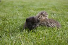 Free Kitty Stock Photo - 3189510
