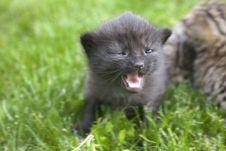 Free Kitty Royalty Free Stock Image - 3189556