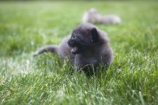 Free Kitty Stock Image - 3189691