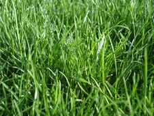 Free Watching Grass Grow Royalty Free Stock Photos - 3189718