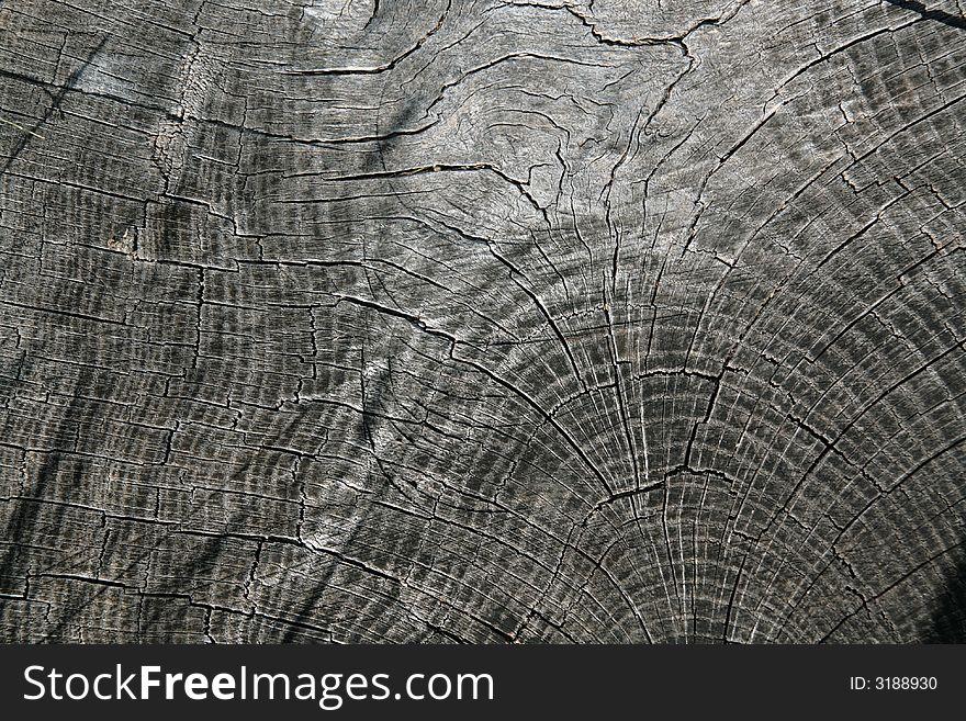 Log end grain 1
