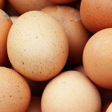 Free Egg Royalty Free Stock Photo - 31800595