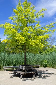 Free Round Bench Underneath A Tree Royalty Free Stock Photography - 31802767