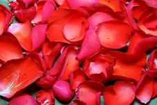 Free Spa Stones And Roses Closeup Stock Photo - 31803150