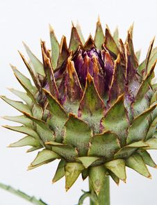 Free Unblown Artichoke Bud Royalty Free Stock Images - 31808329