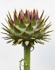 Free Unblown Artichoke Bud Royalty Free Stock Image - 31808556