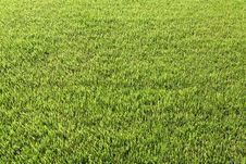 Free Fresh Green Grass Background Stock Photography - 31808572