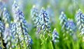 Free Bluebells Stock Images - 31812404