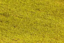 Free Yellow Grass Stock Photography - 31810042