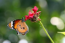 Free Butterfly Stock Photo - 31810620