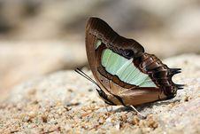 Beautiful Butterfly Stock Image