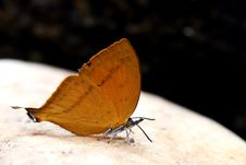 Free Beautiful Butterfly Stock Photography - 31811192