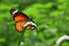 Free Beautiful Butterfly Stock Photography - 31811262