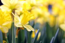 Free Flower Stock Image - 31812451