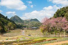 Ang Khang Thailand Royalty Free Stock Photography