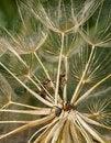 Free Ants Stock Photo - 31820480