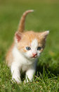 Free Kitten On The  Grass Royalty Free Stock Photos - 31820838