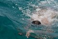 Free Man Is Swimming In Sea Stock Photos - 31848593