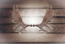 Closeup Horn Moose On Wooden Wall Royalty Free Stock Photography