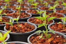 Free Plant In Farm Royalty Free Stock Photography - 31854107